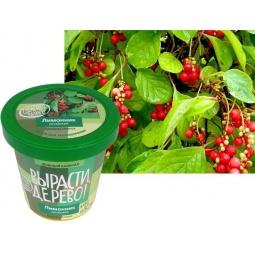 Купить Набор для выращивания Зеленый капитал Вырасти, дерево! «Лимонник китайский»