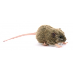 фото Мягкая игрушка Hansa «Крыса бурая»