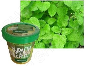 Набор для выращивания Зеленый капитал «Мелисса» zk-035
