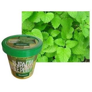 Купить Набор для выращивания Зеленый капитал Вырасти, дерево! «Мелисса»