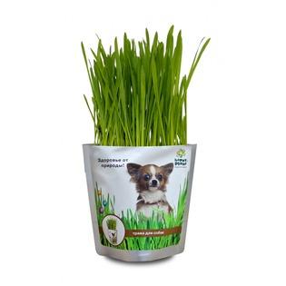 Купить Трава для собак Happy Plant hp-42