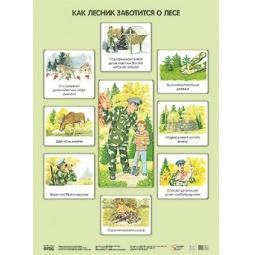 Купить Как лесник заботится о лесе