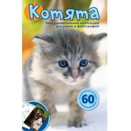Купить Котята