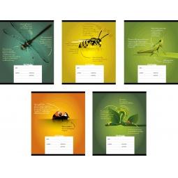 фото Тетрадь в линейку Erich Krause «Все о насекомых». В ассортименте