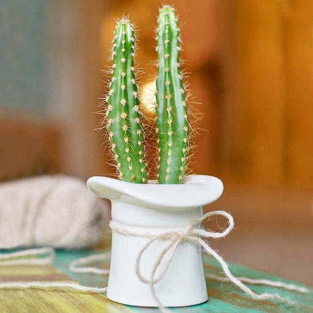фото Набор для выращивания Экочеловеки Eco «Шляпа»