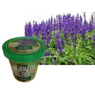 Купить Набор для выращивания Зеленый капитал Вырасти, дерево! «Шалфей»
