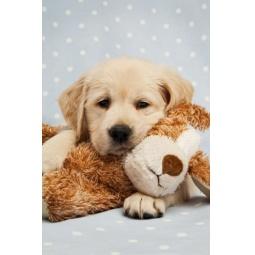 фото Блокнот Бриз «Милый щенок»