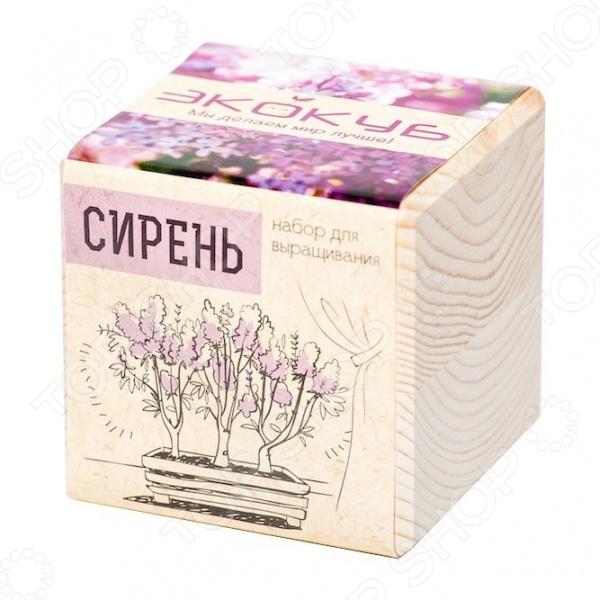 Набор для выращивания Экокуб «Сирень Венгерская»Детские наборы для выращивания кристаллов и растений<br>Набор для выращивания Экокуб Сирень Венгерская станет замечательным подарком для вашего любознательного ребенка. В комплект входит все необходимое для того, чтобы вырастить это замечательное растение. Венгерская сирень может вырасти в красивое, высокое дерево до 4 метров . Она зацветает чуть позже, чем обыкновенная, а ее цветение продолжается до 25 дней. За растением легко ухаживать, оно неприхотливо к погодным и почвенным условиям и не дает корневых отпрысков. Набор для выращивания Экокуб Сирень Венгерская поможет развить у малыша чувство заботы и внимательность к деталям. Кроме того, цветущая сирень станет отличным дополнением его комнаты или оригинальным подарком для мамы с папой.<br>