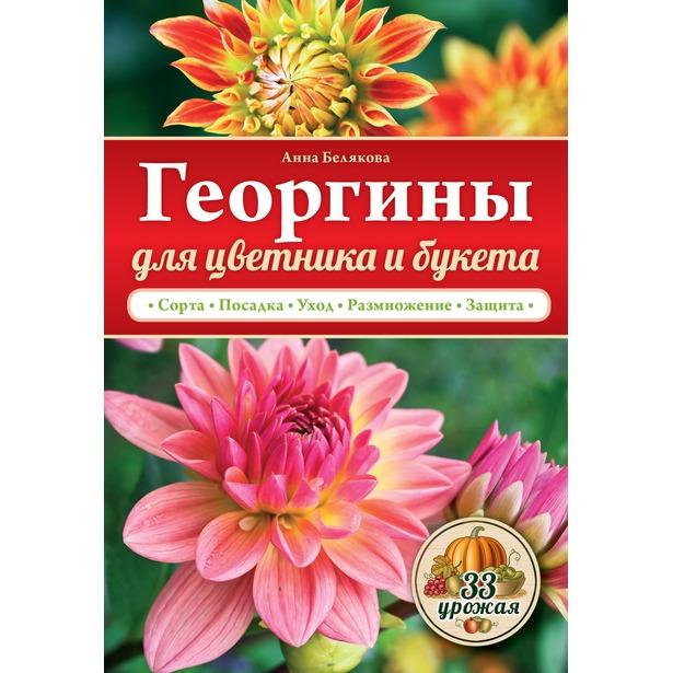 фото Георгины для цветника и букета