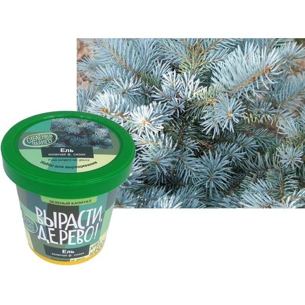фото Набор для выращивания Зеленый капитал Вырасти, дерево! «Ель колючая»