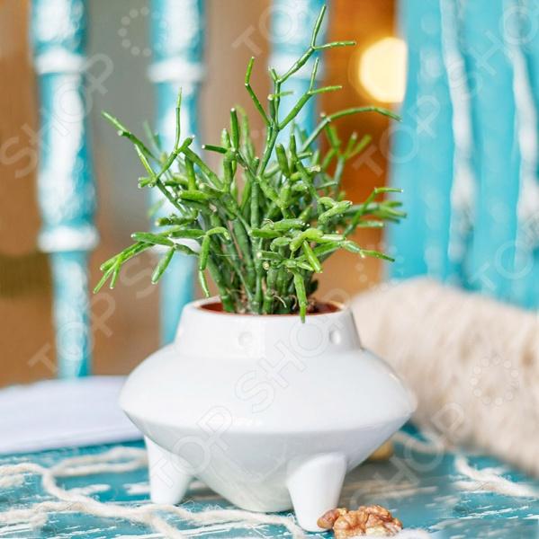 Набор для выращивания Экочеловеки Eco «НЛО»Наборы для выращивания<br>Набор для выращивания Экочеловеки Eco НЛО уникальный комплект, способный добавить уюта любому интерьеру. Живые растения обязательно должны быть в каждом доме или офисе, и вы сможете без труда вырастить их, ведь набор включает все самое необходимое: фигурный горшочек, инструкция, пакетик с грунтом и семена газонной травы.  Травку можно подстригать, придавая нужную форму растительности. При желании вы можете не использовать наши семена и заменить их на свои.  Горшочек оригинальной формы выполнен вручную из качественной керамики. Поверхность изделия допускает раскрашивание при помощи спиртовых маркеров. Украшайте горшочек по своему вкусу, а если не понравится, то стирайте узоры влажной тряпочкой.  Набор упакован в картонную коробку.<br>