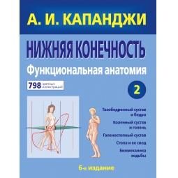 Купить Нижняя конечность. Функциональная анатомия