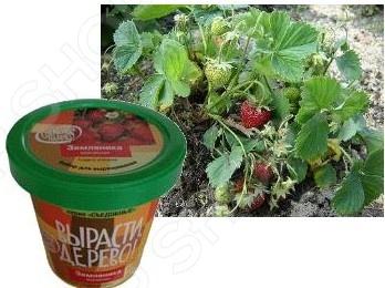 Набор для выращивания Зеленый капитал «Земляника ананасная» zk-038