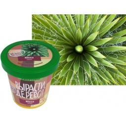 Купить Набор для выращивания Зеленый капитал Вырасти, дерево! «Юкка сизая»