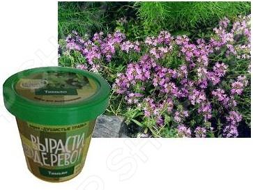 Набор для выращивания ВЫРАСТИ, ДЕРЕВО! Тимьян это отличный набор для выращивания, в котором все есть в комплекте. В молодом возрасте все растения растут очень медленно, однако даже когда растение еще маленькое вы можете использовать его в садовых композициях и групповой посадке. В наборе вы найдете инструкцию, согласно которой в начале вам необходимо поместить семена олеандра на крышку, замочить водой комнатной температуры на 2 дня, следует менять воду 1 раз в сутки. После периода ожидания следует добавить в перлит воды столько, чтобы она полностью впиталась. Процесс достаточно долгий, точно следуйте инструкции на этом этапе. Уже через несколько лет вы можете получить окрепшее молодое растение, которое можно подарить в городском дворе или на вашем дачном участке. В комплекте вы получите:  Пластиковый горшок с крышкой объемом 0,5 литра. Крышка поддон для избытка влаги,  Семена тимьяна,  Плодородный грунт PH 6 , его хватит на первые 1-2 года.