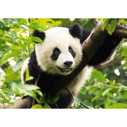 Купить Пазл 500 элементов Trefl «Панда»