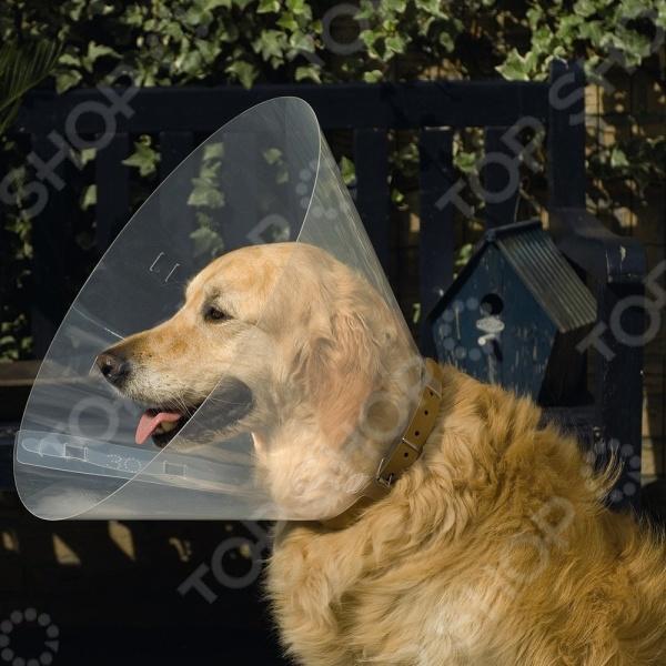 Воротник защитный для кошек и собак Beeztees Recovery комплекс для кошек угловой с полками лестницей и канатом beeztees 405770