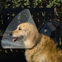 фото Воротник защитный для кошек и собак Beeztees Recovery. Ширина: 20 см