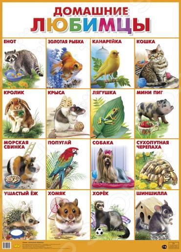 Домашние любимцыДемонстрационные материалы<br>Плакаты знакомят детей дошкольного и младшего школьного возраста с окружающим миром.<br>