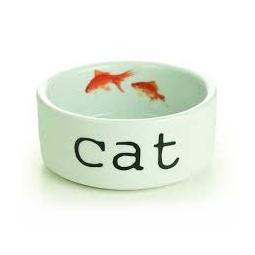 Купить Миска для кошек Beeztees «Snapshot»