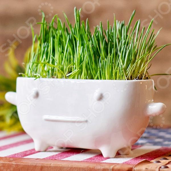 Набор для выращивания Экочеловеки Eco «Буль» рокси кидс надувной круг flipper 0 с музыкой буль буль водичка