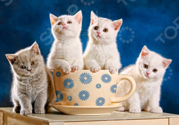 Пазл 500 элементов Castorland «Четыре котенка»