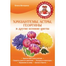 Купить Хризантемы, астры, георгины и другие осенние цветы