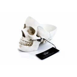 Купить Органайзер для мелочей Suck UK Skull