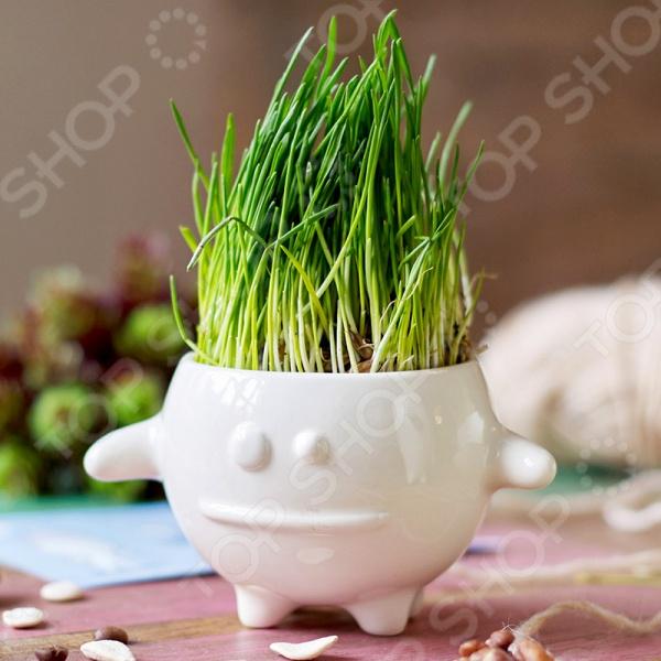 Набор для выращивания Экочеловеки Eco «Кру» набор для выращивания eco кру 1040675