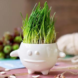 Купить Набор для выращивания Экочеловеки Eco «Кру»