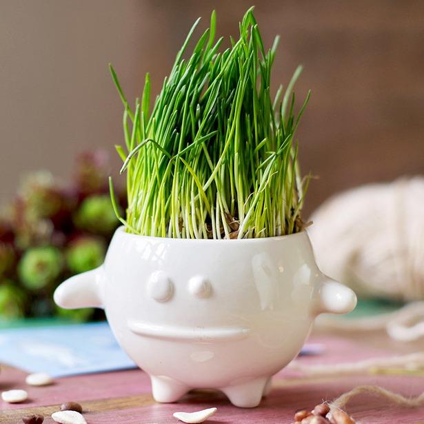 фото Набор для выращивания Экочеловеки Eco «Кру»