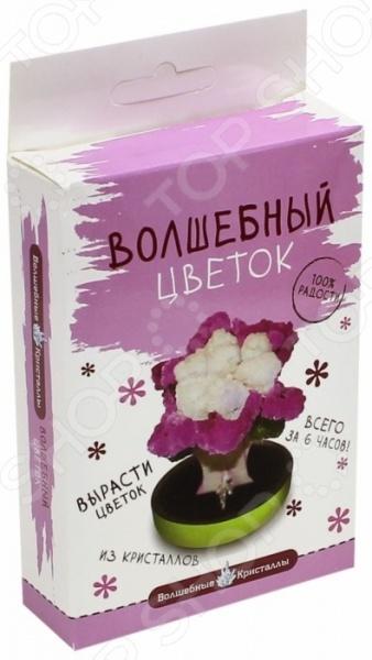 Набор для выращивания Волшебные кристаллы «Пурпурный цветок»  bumbaram волшебные кристаллы красный цветок сd 128