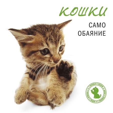 Купить Кошки. Само обаяние