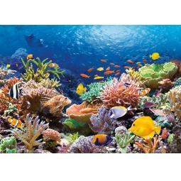 Купить Пазл 1000 элементов Castorland «Коралловый риф»