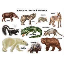 фото Животные Северной Америки