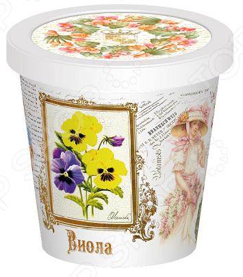 Набор для выращивания Rostokvisa «Виола» наборы для выращивания rostokvisa набор для выращивания настурция