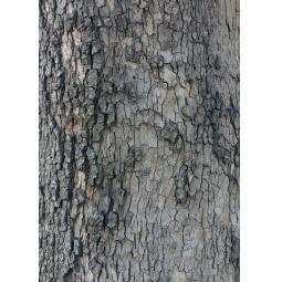 фото Блокнот для записей Лесной