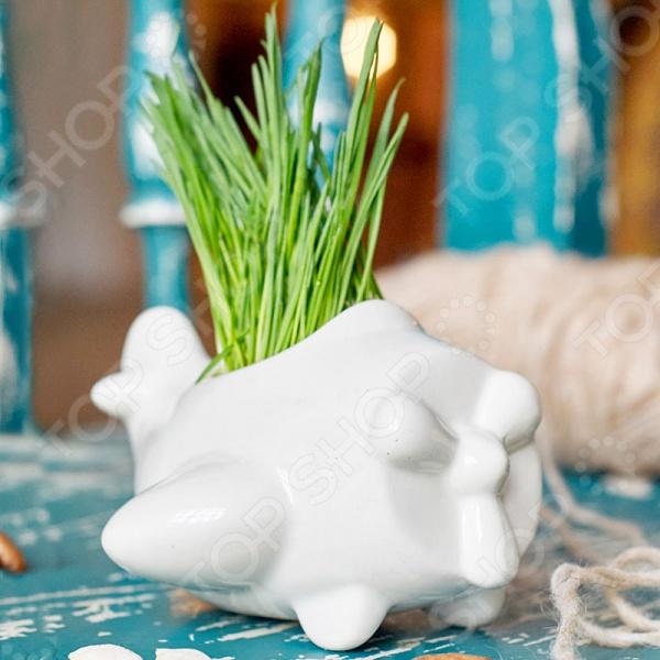 Набор для выращивания Экочеловеки Eco «Самолет»Наборы для выращивания<br>Набор для выращивания Экочеловеки Eco Самолет уникальный комплект, способный добавить уюта любому интерьеру. Живые растения обязательно должны быть в каждом доме или офисе, и вы сможете без труда вырастить их, ведь набор включает все самое необходимое: фигурный горшочек, инструкция, пакетик с грунтом и семена газонной травы.  Травку можно подстригать, придавая нужную форму растительности. При желании вы можете не использовать наши семена и заменить их на свои.  Горшочек оригинальной формы выполнен вручную из качественной керамики. Поверхность изделия допускает раскрашивание при помощи спиртовых маркеров. Украшайте горшочек по своему вкусу, а если не понравится, то стирайте узоры влажной тряпочкой.  Набор упакован в картонную коробку.<br>