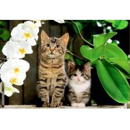 фото Пазл 1500 элементов Step Puzzle Котята и орхидея