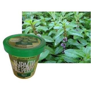 Купить Набор для выращивания Зеленый капитал Вырасти, дерево! «Мята дикая»