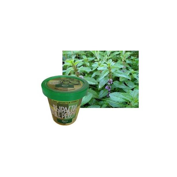 фото Набор для выращивания Зеленый капитал Вырасти, дерево! «Мята дикая»