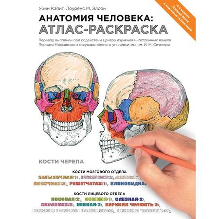 Купить Анатомия человека. Атлас-раскраска