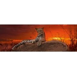 Купить Пазл 2000 элементов Heye «Леопард на рассвете»