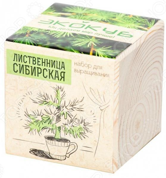 Набор для выращивания Экокуб «Лиственница сибирская»
