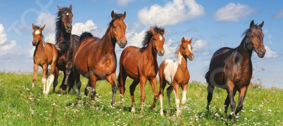 Пазл 600 элементов Castorland «Лошади»
