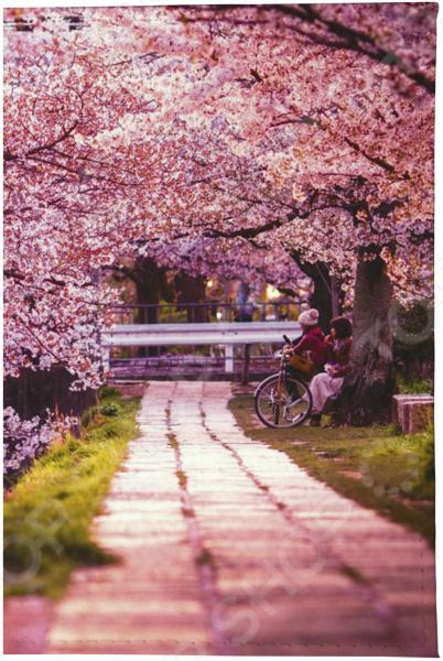 Визитница Mitya Veselkov «Цветущая аллея» визитница женская mitya veselkov цветущая аллея цвет розовый vizit 305