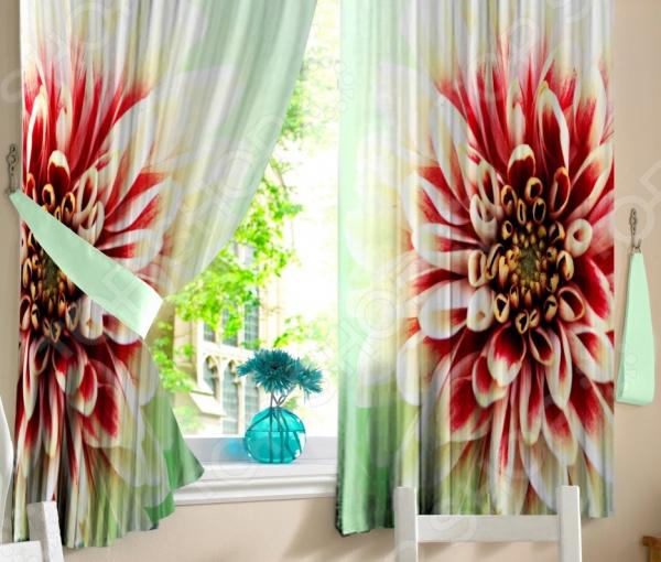 Фото-шторы с подхватами Zlata Korunka «Георгин» клубни георгин у садоводов