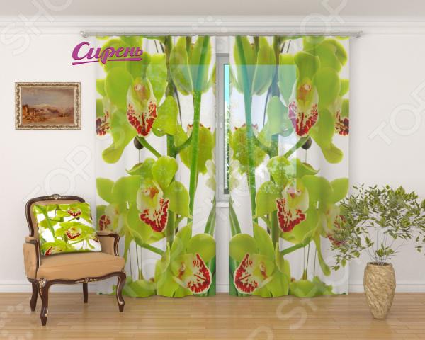 Фототюль Сирень «Зеленая орхидея» фототюль сирень неизвестный цветок