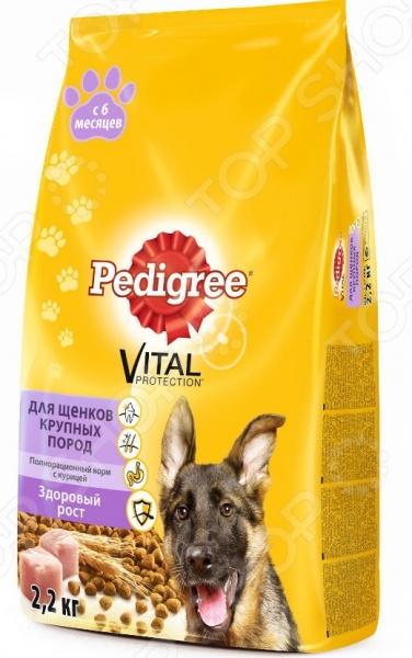Корм сухой для щенков крупных пород Pedigree Vital PROTECTION «Здоровый рост» с курицей