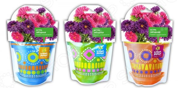 Набор для выращивания Happy Plant «Астра звездная». В ассортименте